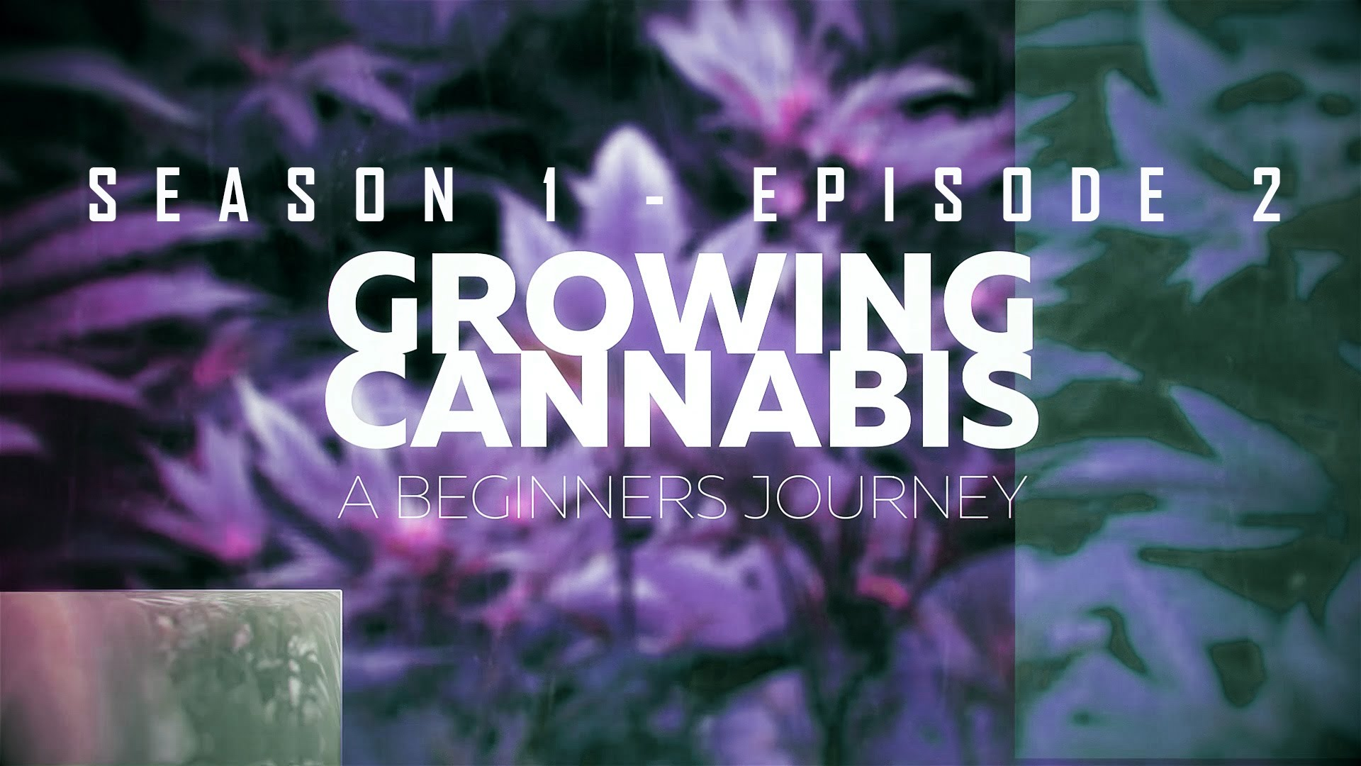 From Clones to Curing: A Beginner's Journey in Cultivating Cannabis #2 – Transplanting/ Start System
