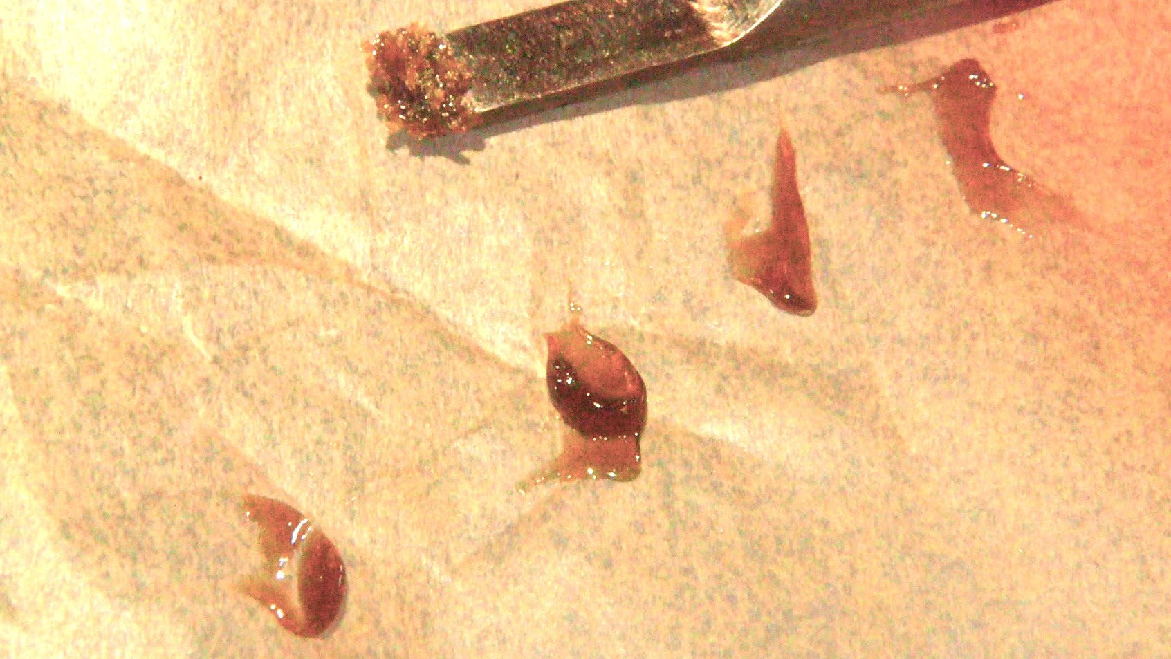 How to Make Shatter With a Quick Wash of Isopropyl Alcohol (QWISO): Cannabasics #12
