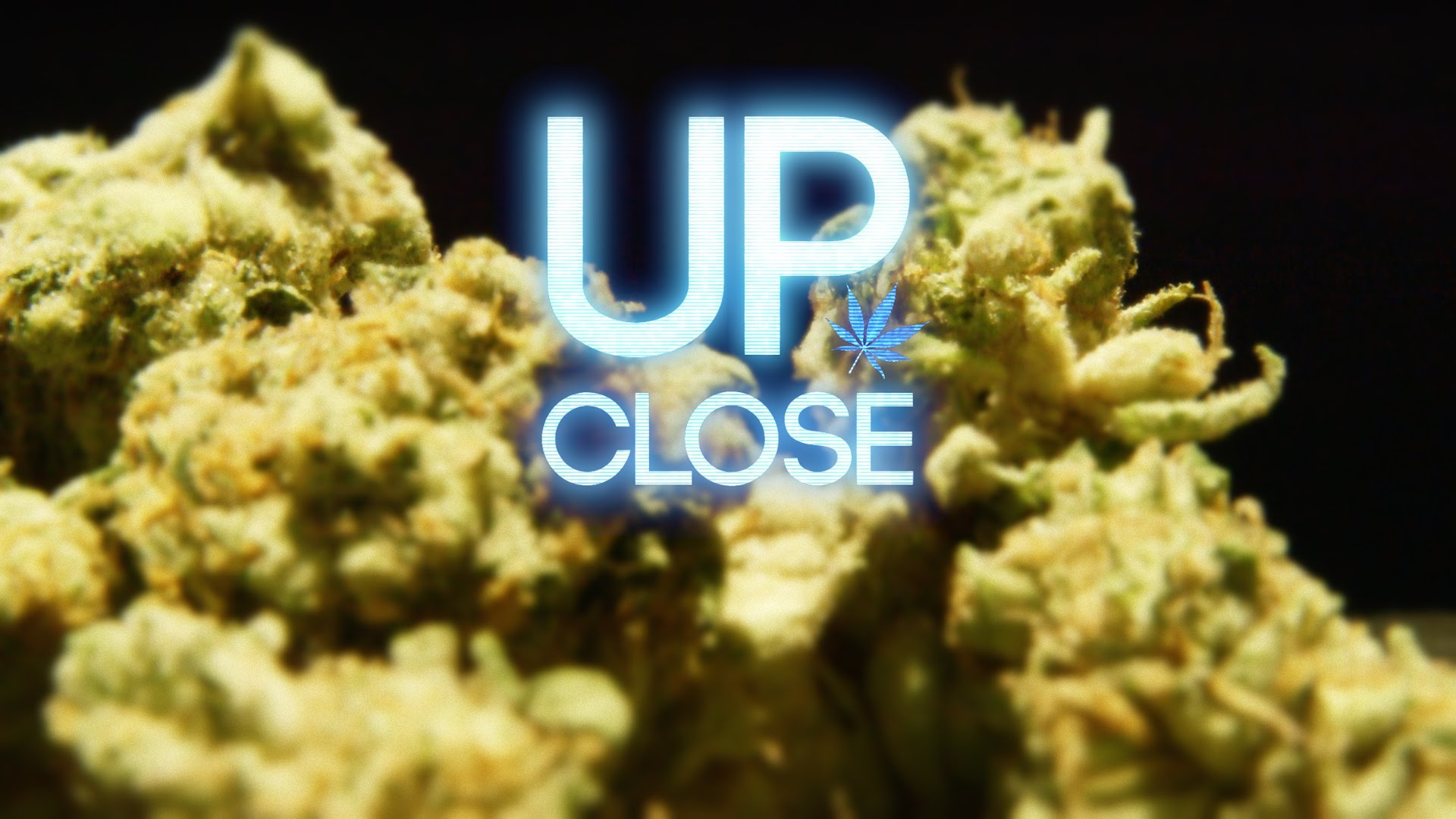Cannabis Up Close #2: Banana OG Kush (Hybrid) – Strain Review